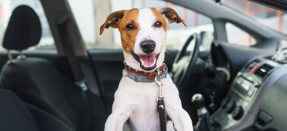 Tips for Driving with Pets
